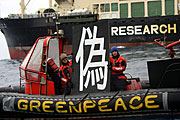 Greenpeace Japan whales campaigner Sakyo Noda sends a message home by holding the Japanese symbol,'nise', meaning FAKE - against the hull of the Japanese whaling fleet's factory ship Nisshin Maru.