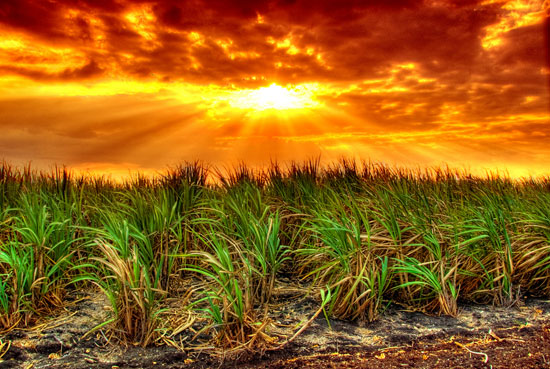 Cuban sunset in the cane fields