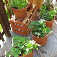 Container garden on the patio. Photo by Thomas Kriese.