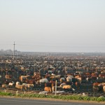 Most beef cattle spend the last few months of their lives at feedlots, crowded by the thousands into dusty, manure-laden holding pens. The air is thick with harmful bacteria and particulate matter, and the animals are at a constant risk for respiratory disease. Feedlot cattle are routinely implanted with growth-promoting hormones, and they are fed unnaturally rich diets designed to fatten them quickly and profitably. Because cattle are biologically suited to eat a grass-based, high fiber diet, their concentrated feedlot rations contribute to metabolic disorders.