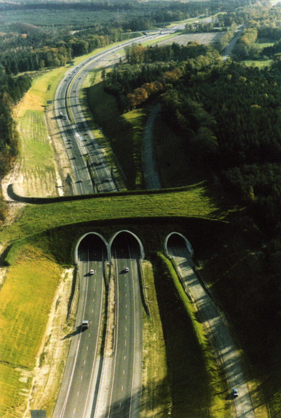 Ecoduct in Netherlands