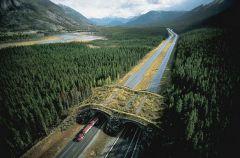Wildlife Overpass, Banff National Park, Alberta, Canada.