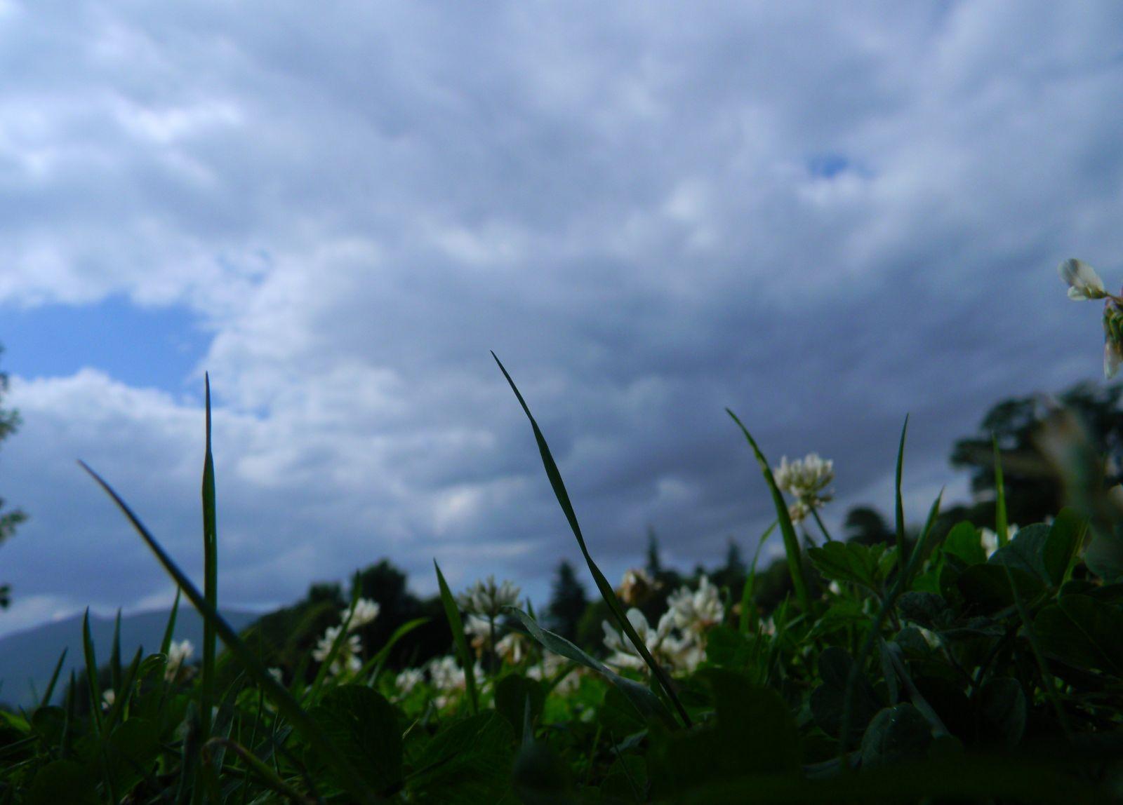 Grass & clouds