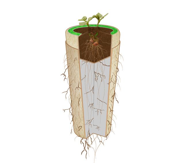biodegradable Urn (image 3)