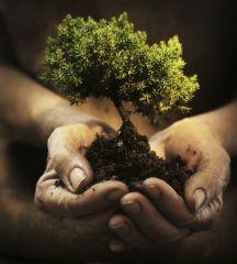 Hands holding a tiny tree-plant