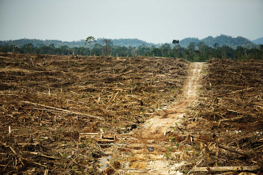 deforestation of the rainforests 5 big causes of deforestation and how you can stop it 0 0  tropical rainforests, like those in the amazon, play a vital role in the water cycle by providing rain to the region.