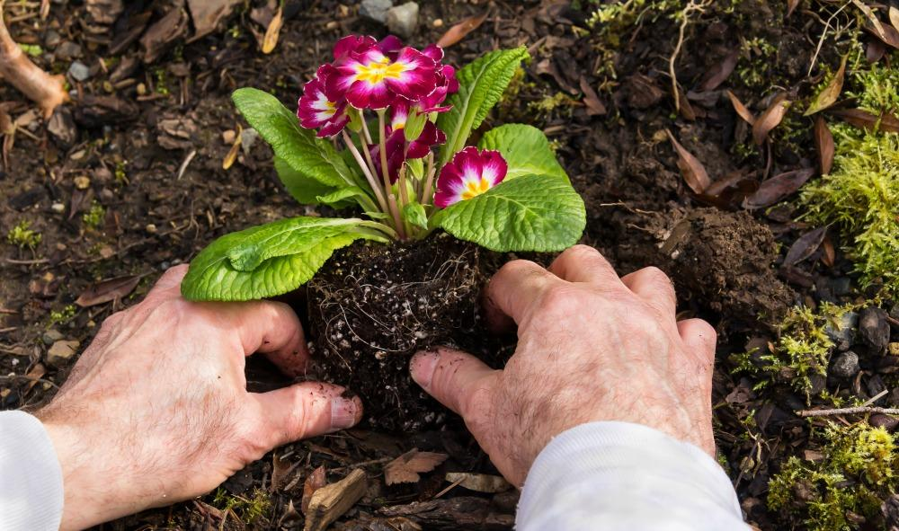 Pain-Free-Gardening.thumb.jpg.8a53dfc18c