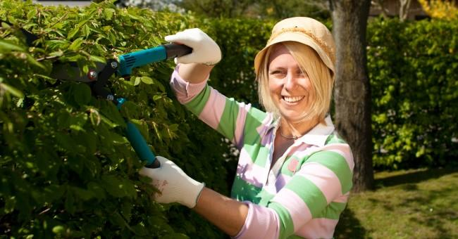 woman_cut_hedge_gardening_hobby.jpg