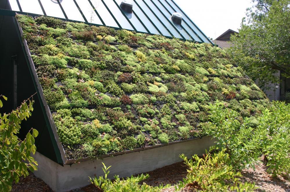 Green_Roof.thumb.jpg.59d8c1952672b377ea1