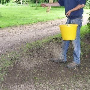 Auckland - Reseeding New Lawn