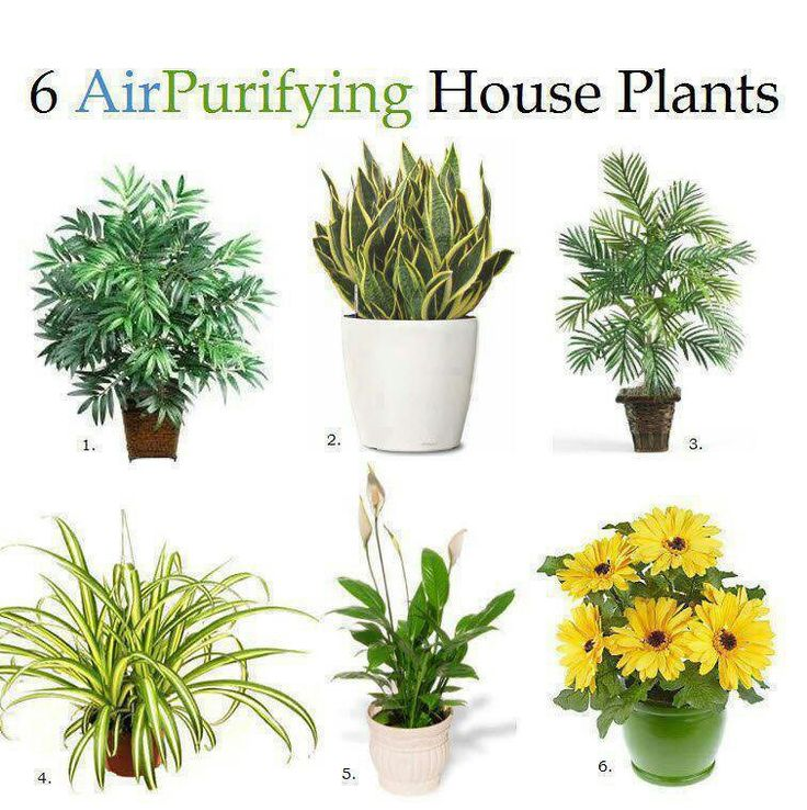 Air purifying plants.jpg