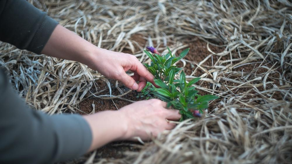4 Ways To Safely Landscape Your Yard And Protect The Environment.jpg