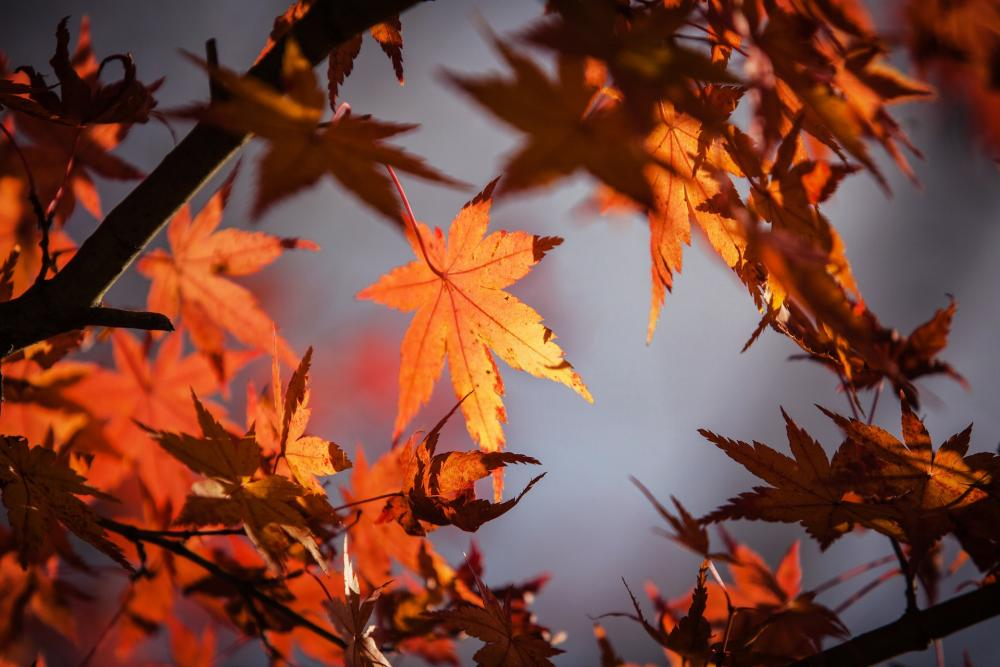 Fall Foundation Fundamentals 3 Tips For Making Your Home Energy Efficient.jpg