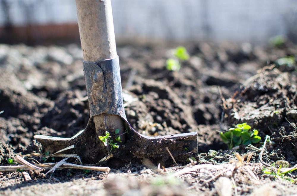 Natural Plants, 4 Tips for Starting an Organic Garden.jpeg