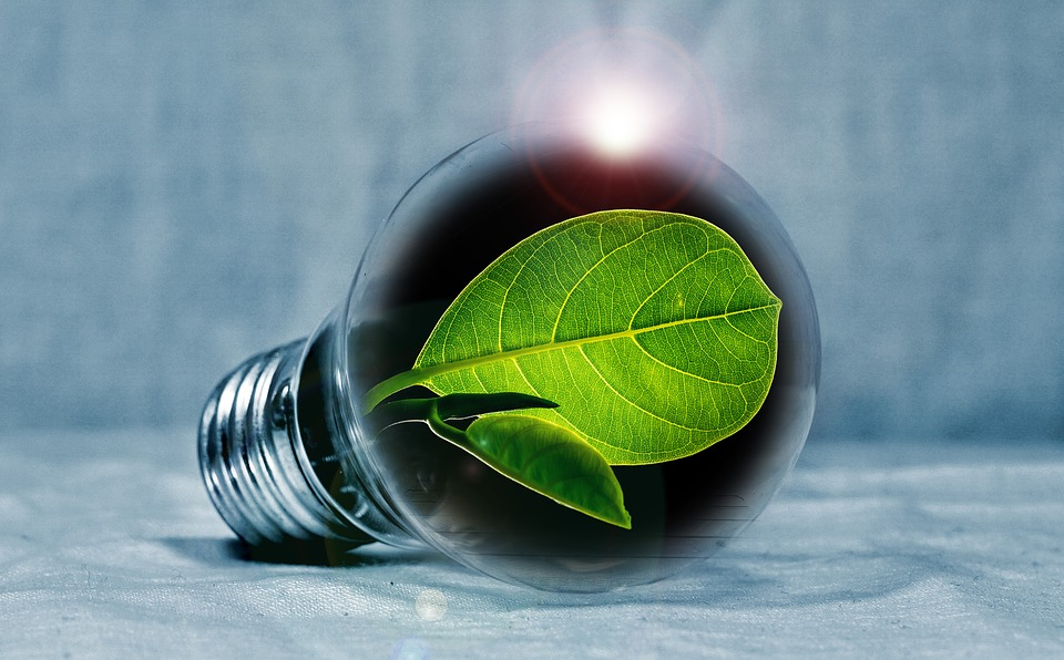 5 Tips to Making Your Home Environment Friendly.jpg