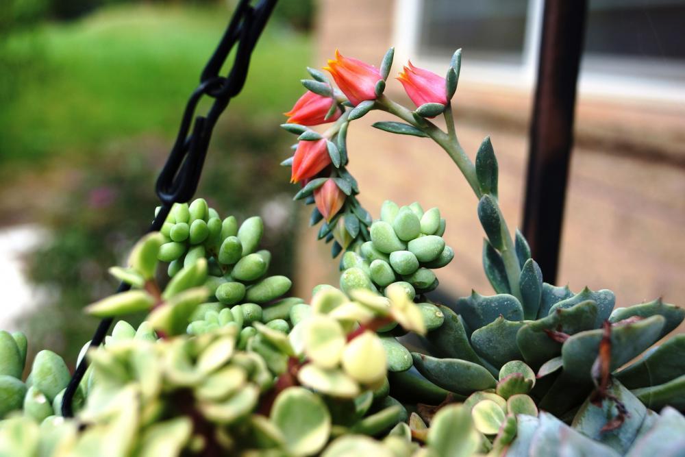 succulent-804988_1920.jpg