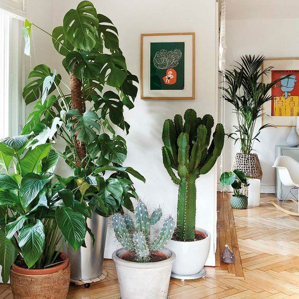 Simple Steps to Transform Your Home into A Green Home3.jpg