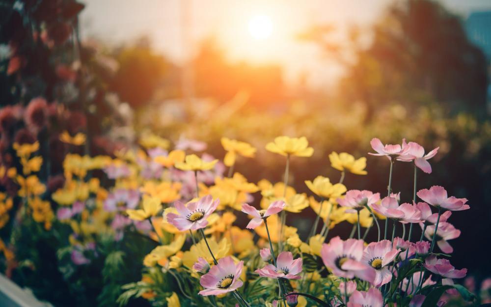 garden-flowers.jpeg