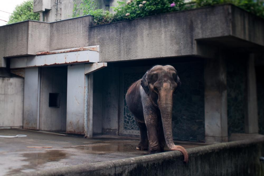 elephant in zoo.jpg