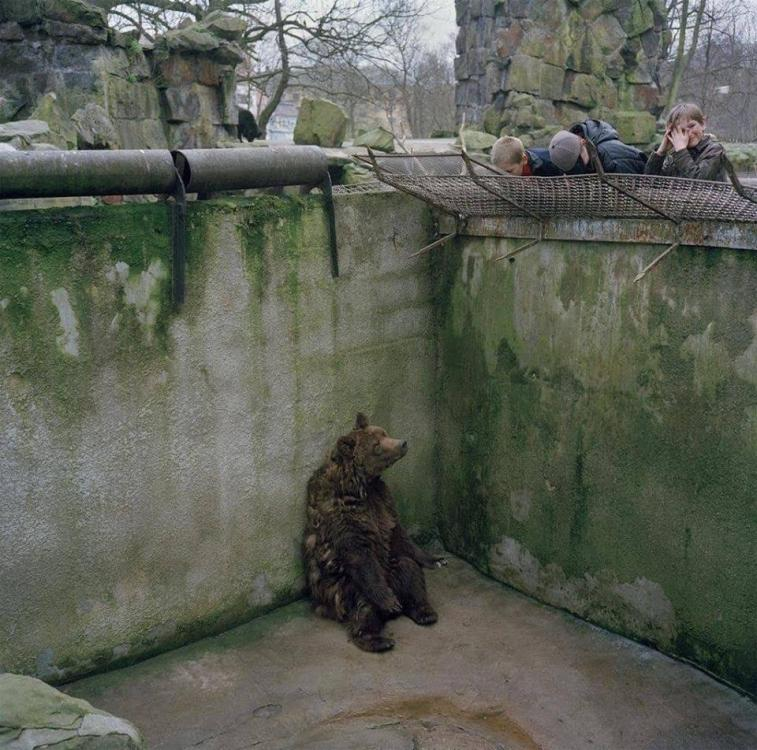 bear in zoo.jpg