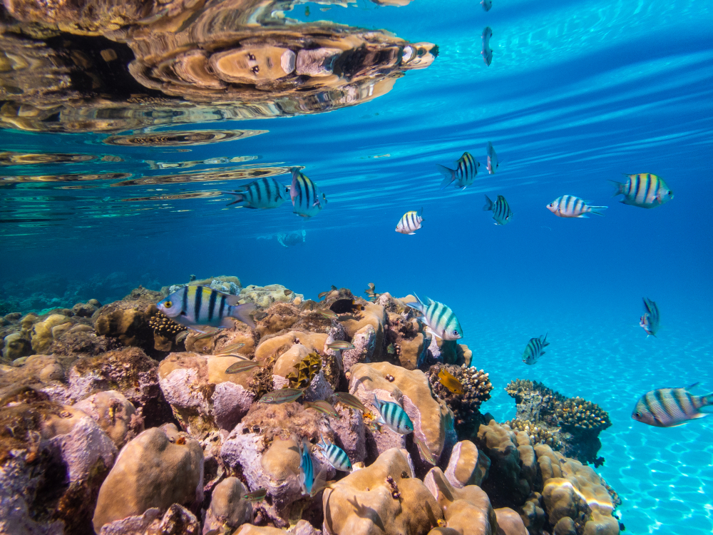 Monaco-sustainable-future-3D-reef.jpg
